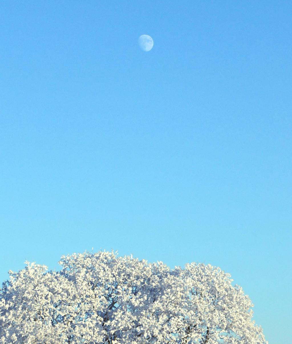 340. Vinter